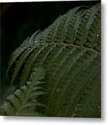 Hapuu Pulu Hawaiian Tree Fern  Metal Print