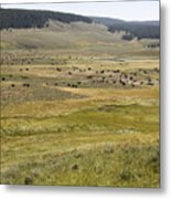Hayden Valley Herd Metal Print