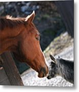 Hello Friend Metal Print