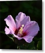Hibiscus Light Metal Print