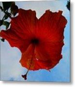 Hibiscus Red Metal Print