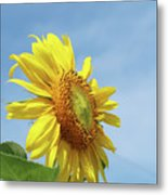 Higher And Higher Metal Print