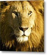 His Royal Highness Metal Print