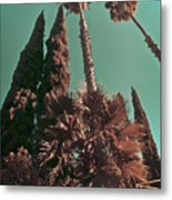 Hollywood And Vine Metal Print