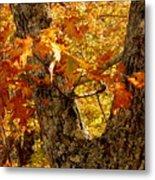 Hometown Series - Deep In The Woods Metal Print