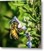 Honey Bee On Bush Metal Print