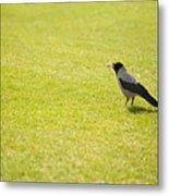 Hooded Crow Bird Gathering Hay Metal Print