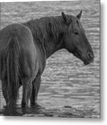 Horse 10 Metal Print