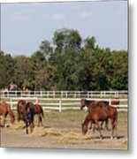 Horses Eat Hay On Ranch Metal Print