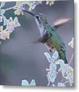 Hummingbird 0091 Metal Print
