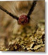 Hungry Caterpillar Metal Print