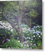 Hydrangea Flowers  Metal Print