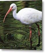 Ibis In The Marsh Metal Print