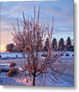 Icy Tree At Sunset  Metal Print