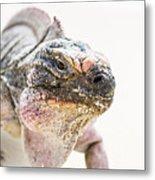 Iguana On The Beach Metal Print
