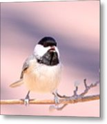 Img_0001 - Carolina Chickadee Metal Print