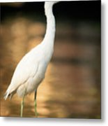 Immature Little Blue Heron Metal Print