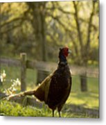 In My Garden Metal Print