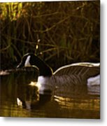 In The Warm Evening Sunlight Metal Print