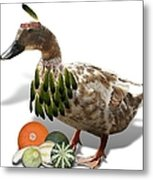 Indian Duck Metal Print