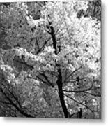 Infrared Tree Pic Metal Print