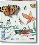 Insects And Garden Pansy Metal Print