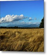 Into The Grasslands. Metal Print