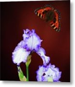 Iris And Butterfly Metal Print