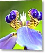 Iris Flower Metal Print by Heiko Koehrer-Wagner