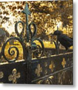 Jackdaw On Church Gates Metal Print