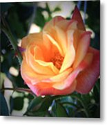 Jacob's Rose Metal Print
