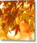 Japanese Maple In Fall Metal Print