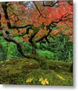 Japanese Maple Tree In Autumn Metal Print