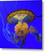 Jellyfish At California Academy Of Sciences In San Francisco, California Metal Print