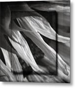 Just Shy In Black And White Metal Print