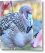 Juvenile Flamingo Metal Print