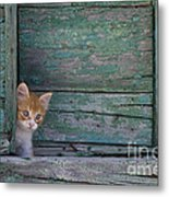 Kitten Peeking Out Metal Print