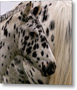Knabstrupper Foal Metal Print