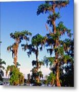 Lake Martin Cypress Swamp Metal Print