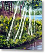 Lakeside Birches Metal Print