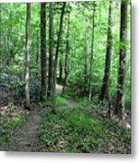 Lakeside Trail Winding Path - Yellowwood Lake Metal Print