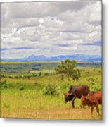 Landscape In Malawi Metal Print