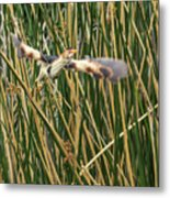 Least Bittern Flight Metal Print