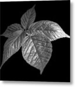 Leaves Metal Print by Tony Cordoza