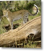 Leopard In The Forest Metal Print