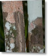 Lichen On The Trees At The Coba Ruins  Metal Print