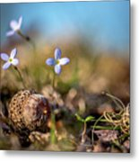 Life Delicate And Strong Metal Print