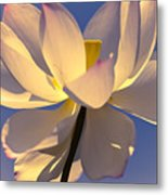 Lilies Of The Water V Metal Print