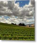 Livermore Vineyard Metal Print