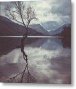 Lone Tree At Llyn Padarn Metal Print
